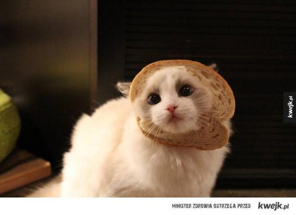Kot udaje, że jest chlebem