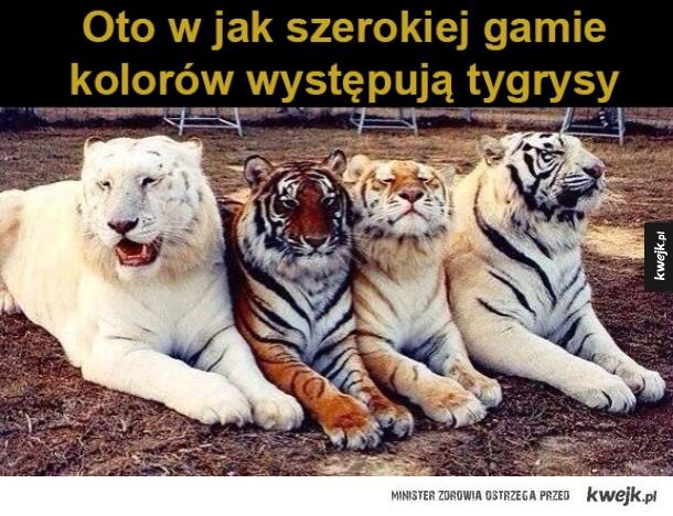 https://i1.kwejk.pl/k/obrazki/2016/02/97fb90be9f58278601a2435fde20146c.jpg