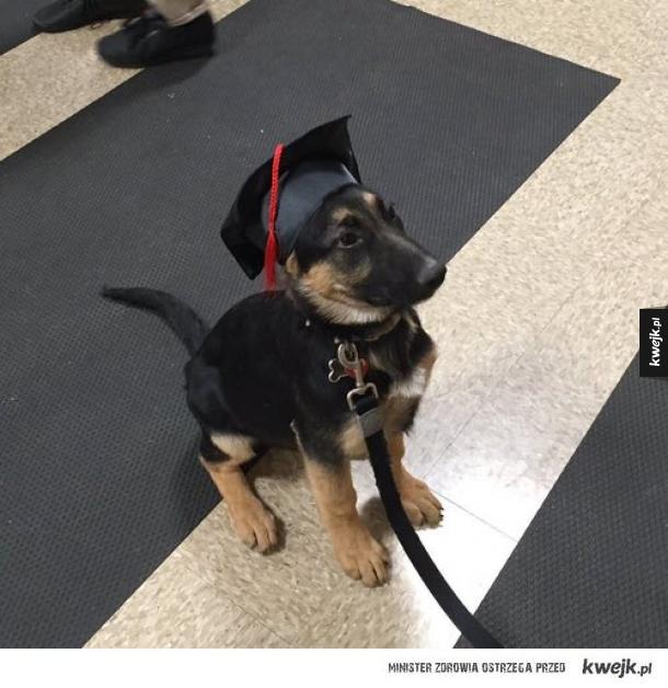 Wykształcony pies