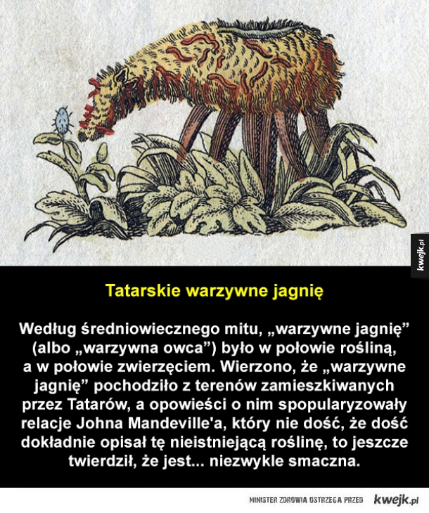 Nieprawdziwe i dziwaczne zwierzęta, które podobno istniały