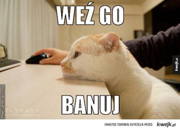 Słuchaj kota