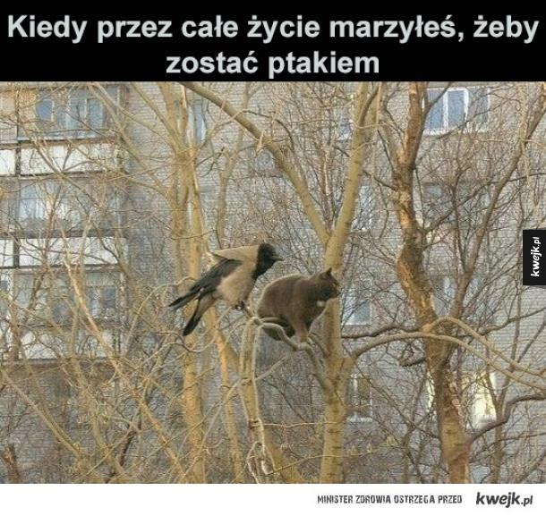 Na Gałęzi