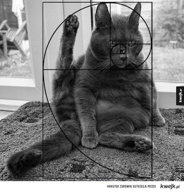 Kot Fibonacciego