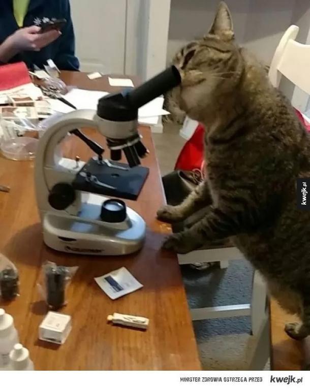 Kot robi naukę