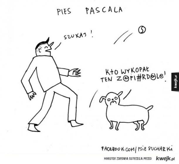 Pies Pascala