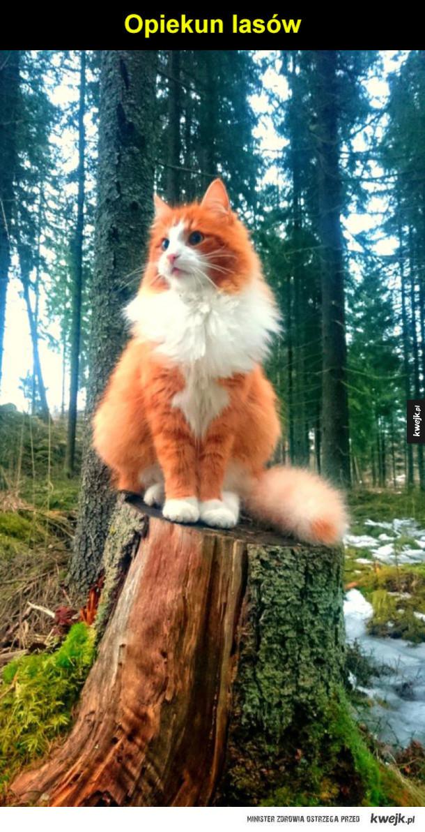 opiekun lasów