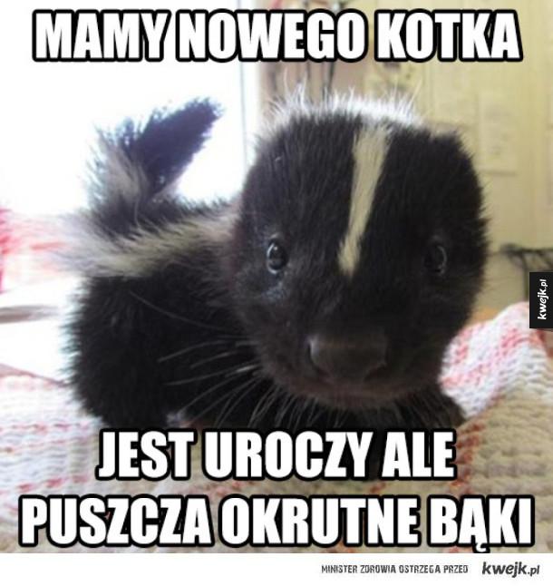 Dziwny kotek