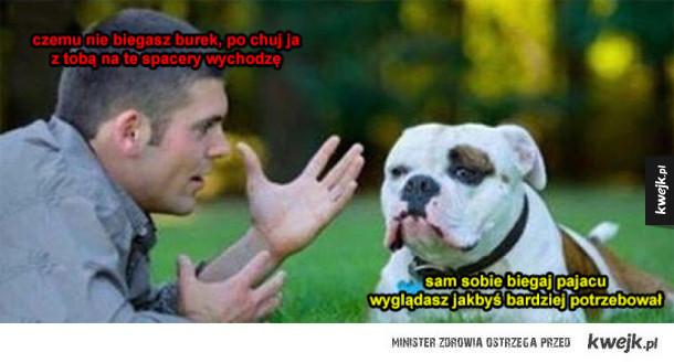 gdyby psy mówiły