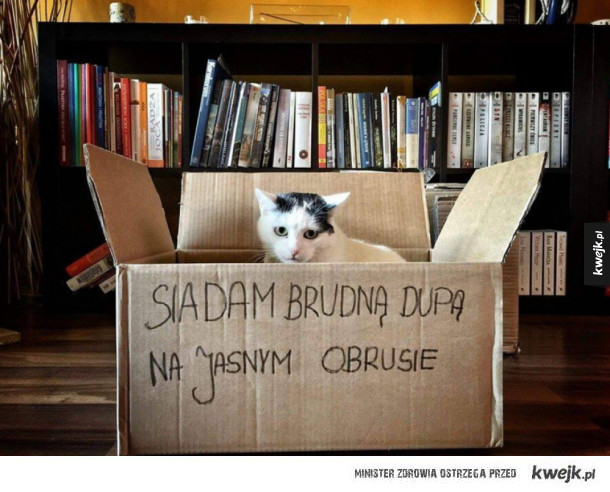 winny kot