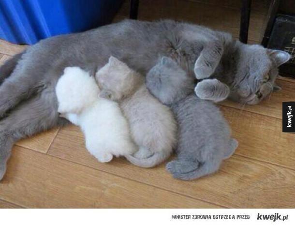 kolorki kotełków