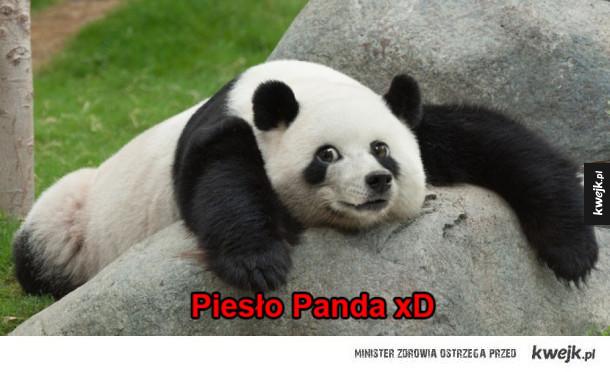 Panda? :D