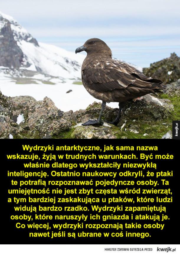 Niezwykle inteligentne ptaki