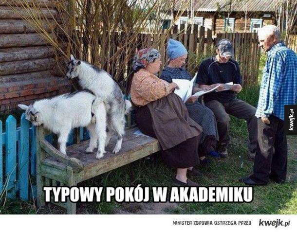 Typowy akademik
