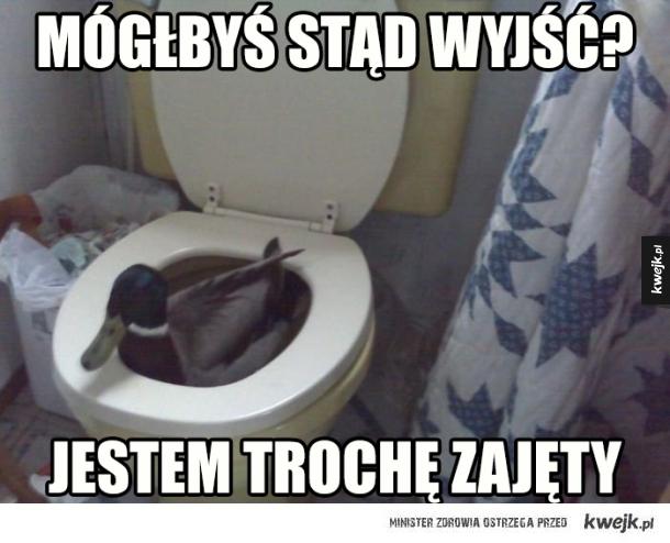 WC Kaczor