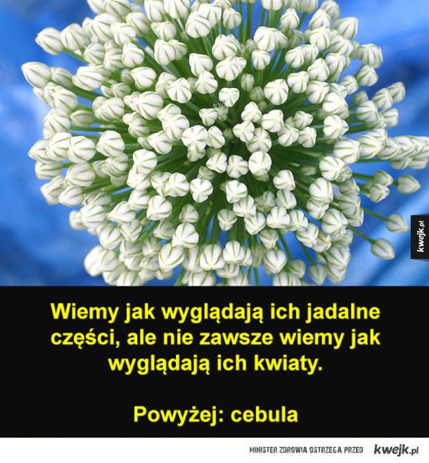 Jadalne rośliny o pięknych kwiatach