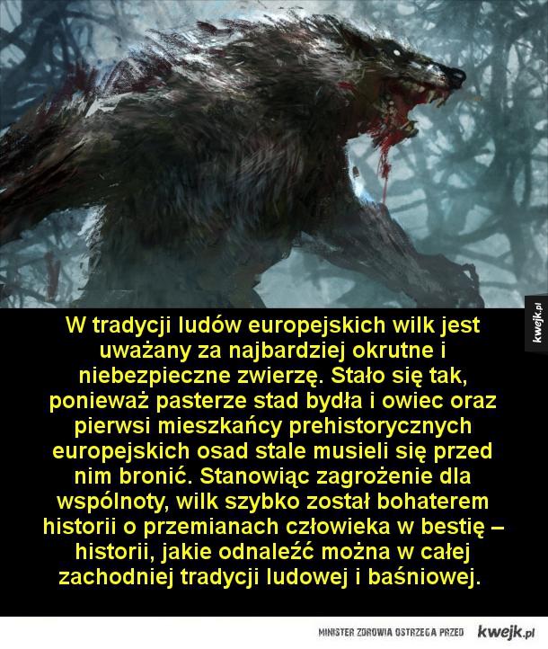 Wilkołaki, bestie z koszmarów - W tradycji ludów europejskich wilk jest uważany za najbardziej okrutne i niszczycielskie zwierzę. Stało się tak, ponieważ pasterze stad bydła i owiec oraz pierwsi mieszkańcy prehistorycznych europejskich osad stale musieli się przed nim bronić. Stanowiąc z