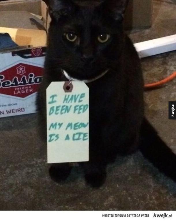 kot kłamczuszek