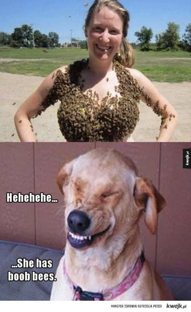 Boob bees