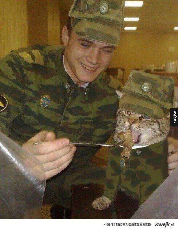 Kot wojskowy