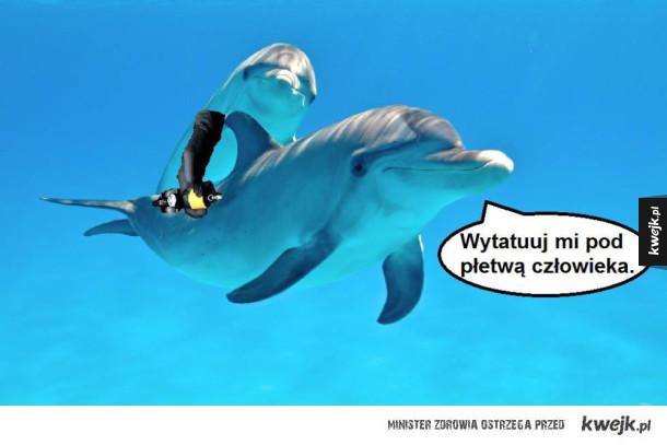 Dziwne zwyczaje delfinów