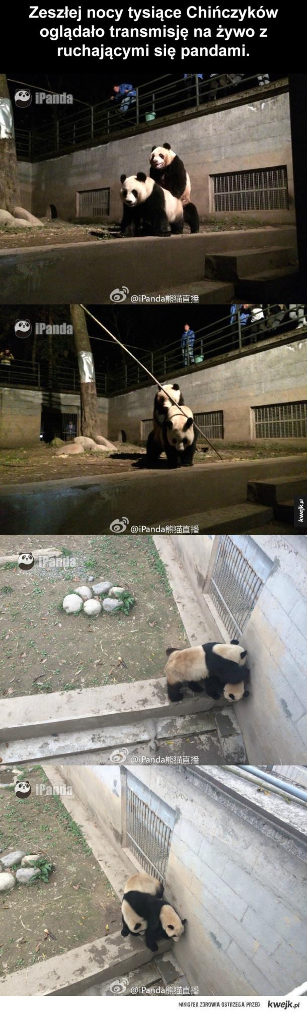 Pandy nie mają prywatności
