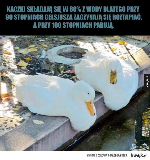 Dlatego kaczki nie korzystają z sauny