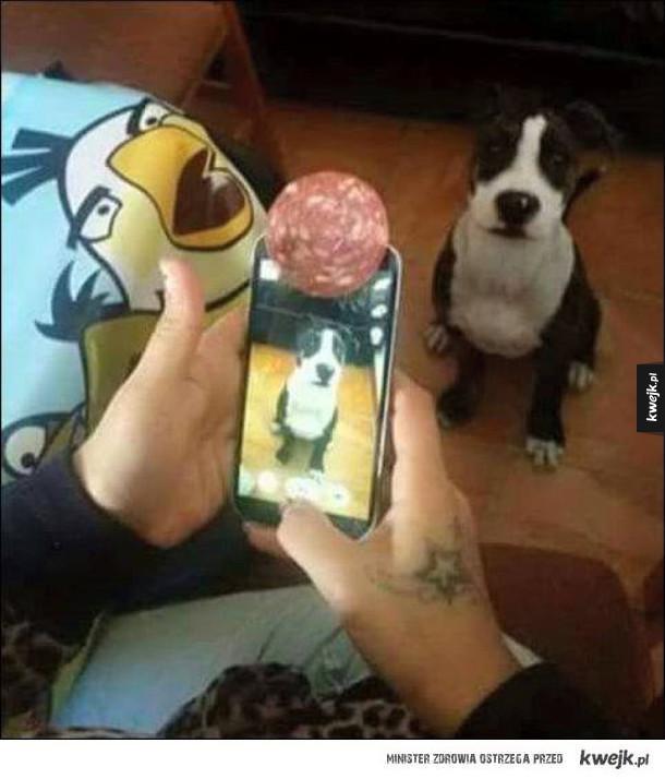 jak zrobić zdjęcie psiakowi