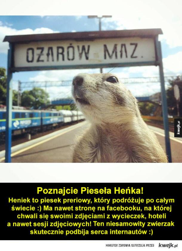 Pieseł Heniek!