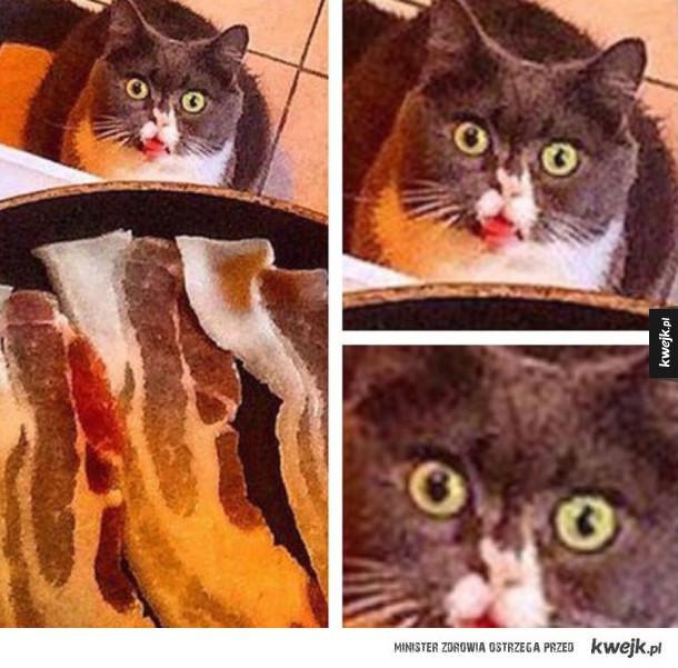 CHciałbym, żeby ktoś na mnie patrzył tak jak ten kot na bekon