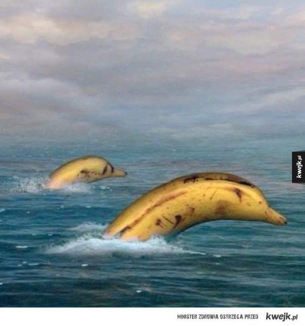 Banany delfinie, rzadki okaz