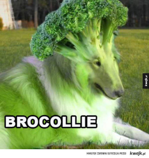 Brocollie