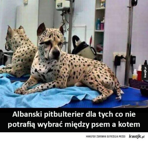 Pitbulterier