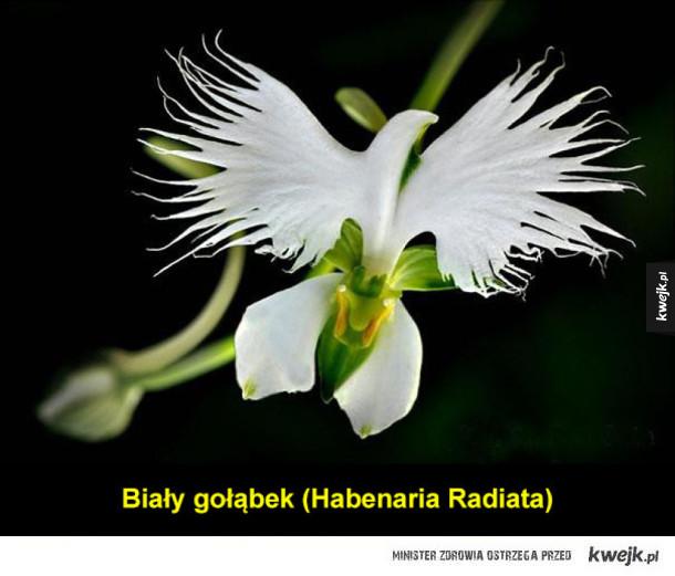 Kwiaty orchidei czasem wyglądają jak coś zupełnie innego