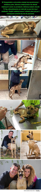 Adoptowany pies