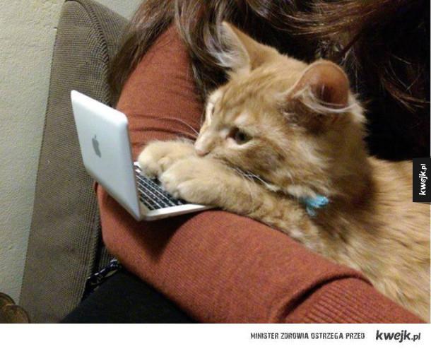 Laptop dla kotka