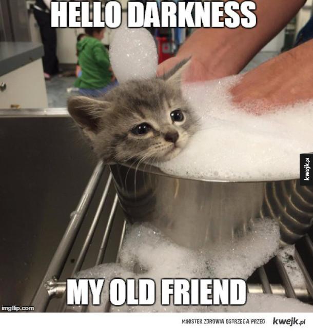 Smutny kotek