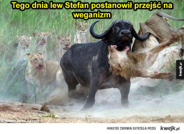 Lew Stefan