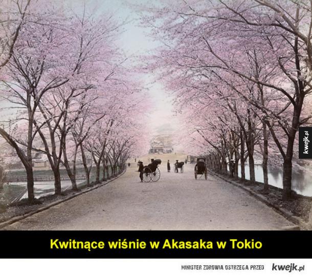 Japonia na XIX-wiecznych fotografiach