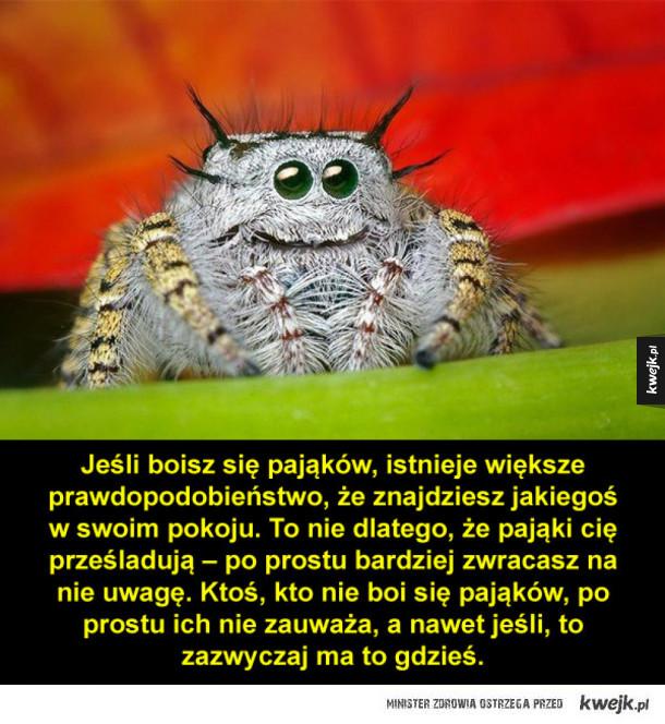 Kilka interesujących informacji o pająkach