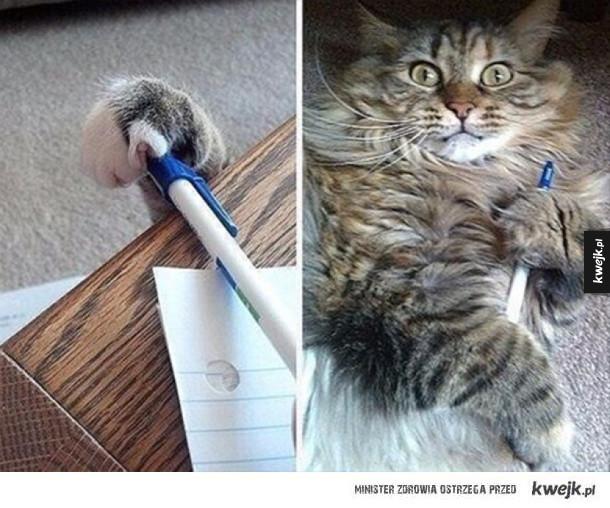 koteł kradziej