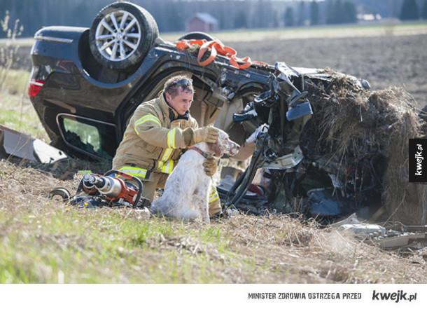 Strażacy ratujący zwierzęta