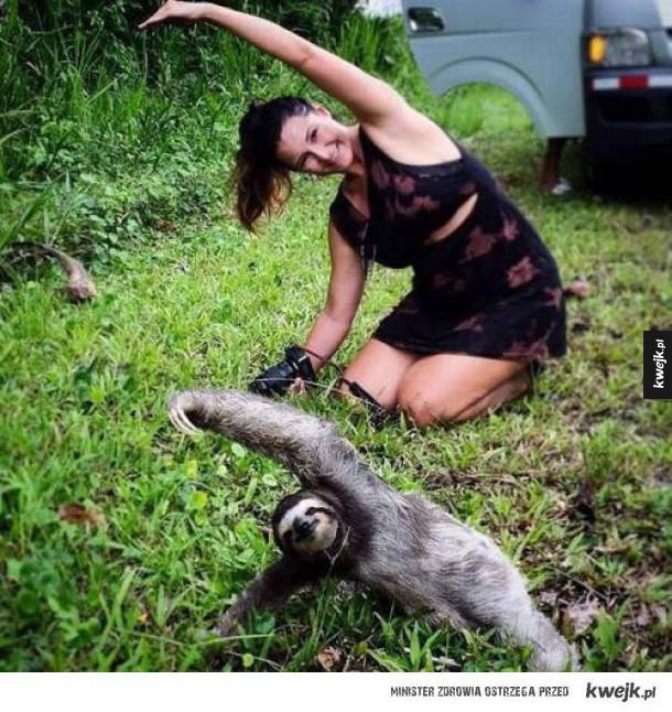 Leniwiec ćwiczy więcej ode mnie