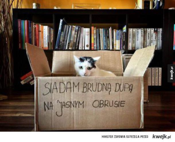 Shaming box