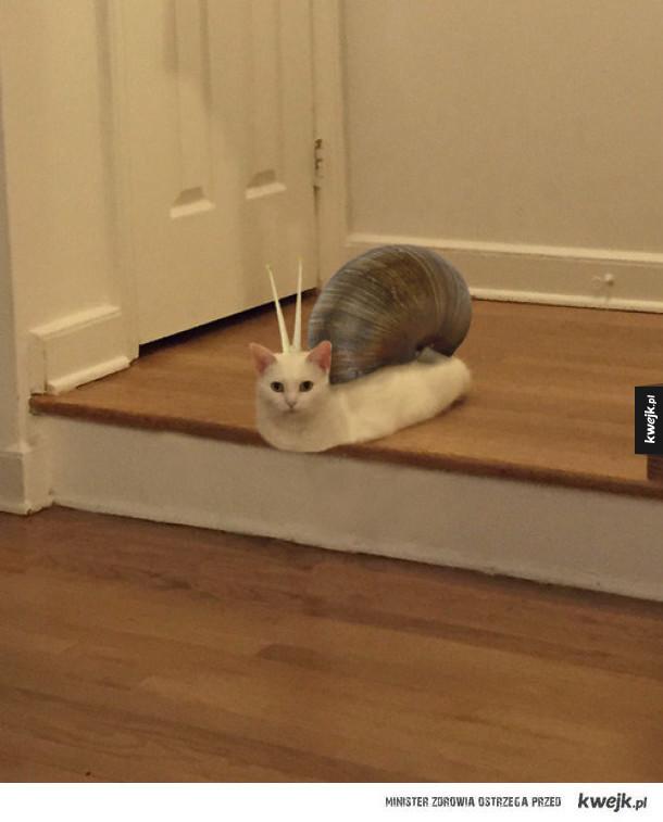 Kot ślimak