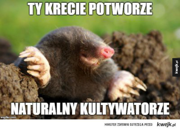 Krecik