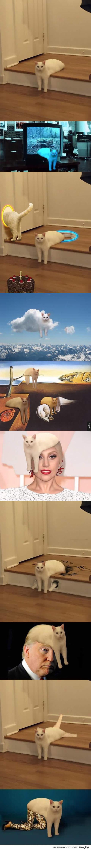 koteł fotoszopeł