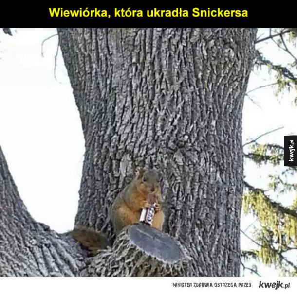 Wiewiórki, które ukradną twoje jedzenie
