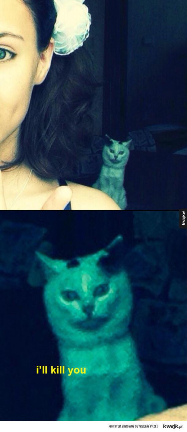 Miły koteczek