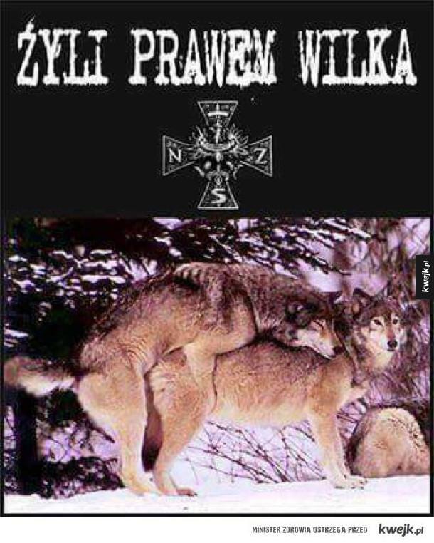 Żyli prawem wilka