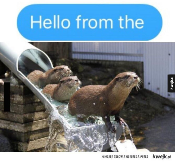 """Hello from the otter slide"" czy jakoś tak"
